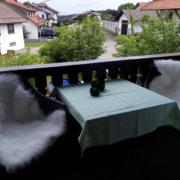 Feriensuite Waldstube - Balkon