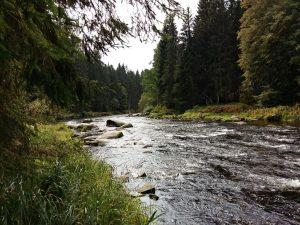 Wandern direkt vor der Tür im Bayerischen Wald