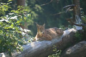 Nationalpark Bayerischer Wald On Tour