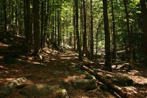 Naturpfade zum Lusen