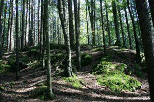 Rundweg Forelle in der Steinklamm, Bayerischer Wald