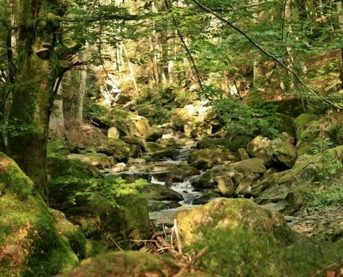 Steinklamm Tour -Bayerischer Wald – Nationalpark