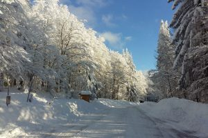 Traumwinter im Nationalpark und in der Arberregion
