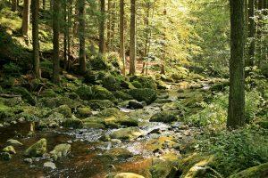 Wilde Wasser – ganz ruhig