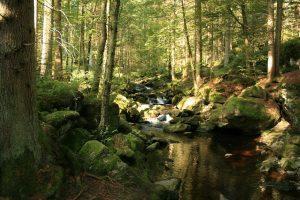 Wildromantik – Wald – Berge
